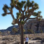 Running through the desert of Joshua Tree National Park..